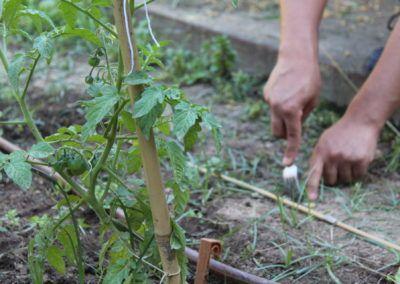 tomàquets hort sostenible fundesplai