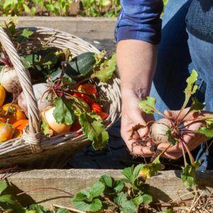 Curs Foodopian alimentació sostenible Fundesplai UVic